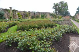 The rose garden at Hever Castle.