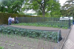 More raised vegetable beds with netting to keep the moths at bay.