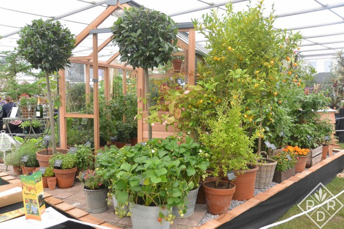 Another splendid greenhouse display.