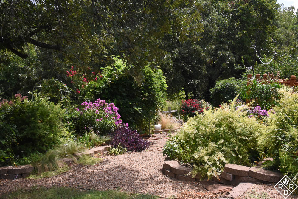 The back garden with its gravel paths is very forgiving of my inattention. Dee Nash
