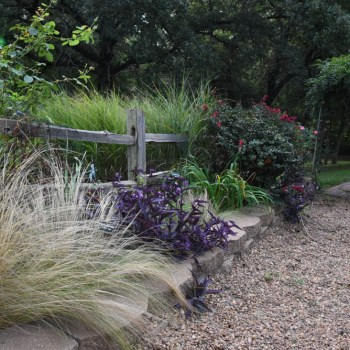 Side borders with Mexican feather grass, Nassella tenuissima (f/k/a Stipa) and Setcreasea pallida 'Purple Heart.'