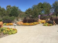Purple fountain grass, 'Profusion' zinnias and black elephant ears at the entrance/exit to the Children's Garden.