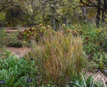 Back garden beds in November with 'Annabelle' hydrangea and 'Heavy Metal' switchgrass.