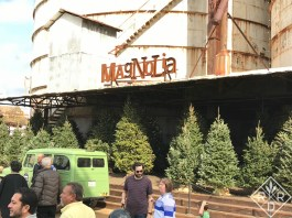 Another view of the Christmas tree lot at Magnolia Market. Photo by Dee Nash