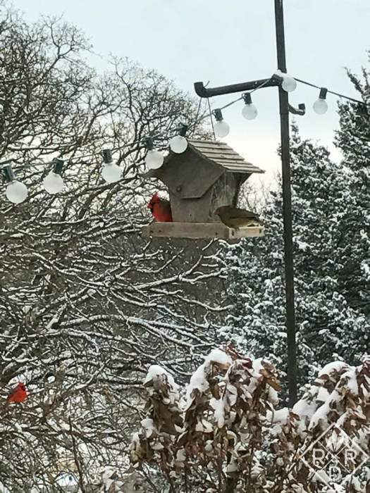 Male Cardinals don't mind each other in winter when they need to be at the feeder. However, when temperatures and sunlight both increase in spring, watch out! They are fiercely territorial.