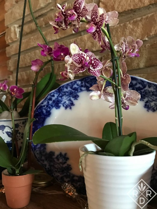 Orchids with a blue and white platter in my home.