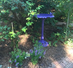 We painted a birdbath purple with spray paint right before.