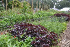 Netting to keep cutting garden blooms supported.