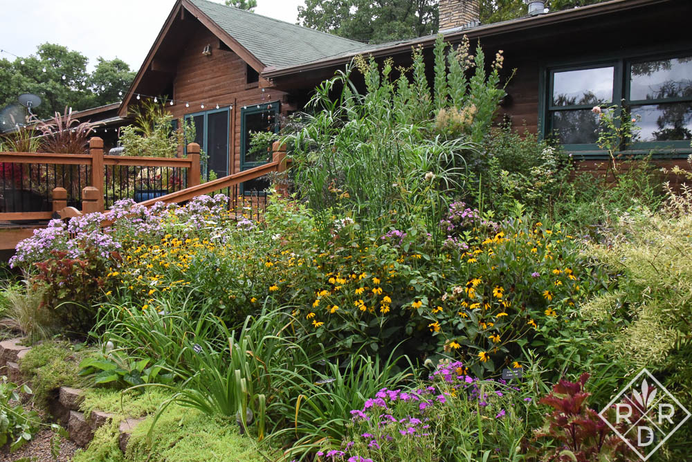 Tiered borders with Rudbeckia fulgida 'Goldsturm,' 'Becky' shasta daisies and 'Bright Eyes' phlox is blooming with abandon from all the rain.
