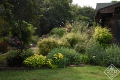 Another view of the back garden and this favorite border filled with coleus and native plants, along with daylilies. I'll be digging up the daylilies which were host plants for the tour.