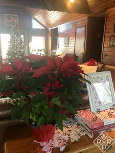 Poinsettia and indoor Christmas decor.