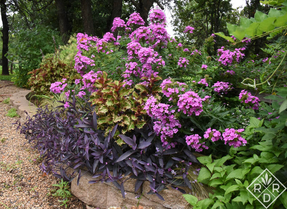 Phlox, coleus and purple heart are an easy combo for the height of an Oklahoma summer.