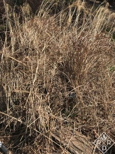 Although I try not to touch materials more than once, with grasses, I sit and cut them with long shears and lay the spent grasses on the side. I then throw them into the garden cart or just carry them down to the pile.