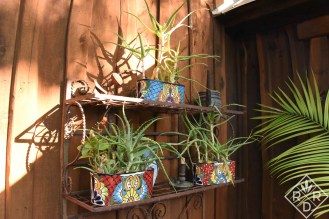 Succulents in Talavera pottery. Luckily, for Oklahomans, we now have access to Talavera pottery too. I love the pumpkins and witches myself.