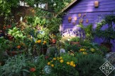 Lucinda's vegetable garden is full of bold colors and happy plants.