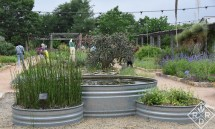 At the center of the courtyard are three stock tank ponds. Stock tanks are often used as ponds in Austin gardens. They are practical and less expensive in a cattle-producing state, and they have a cool, gunmetal gray vibe that works so well in the landscape.