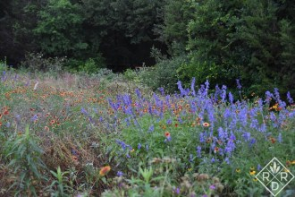 A wonderful wildflower meadow with gaillardia and some type of salvia. I didn't enhance this photo. It really was that shade of blue.