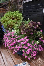 Best plants for summer containers. One of my favorite containers Dee Nash garden
