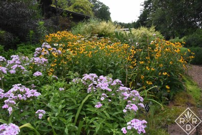 Phlox paniculata 'Bright Eyes', 'Becky' shasta daisies and 'Goldsturm' blackeyed Susans.