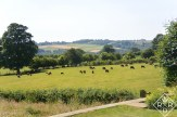 Cattle and the Yorkshire view. Yes, it does truly look just like the television shows on PBS.