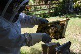 Inspecting a honey frame. I didn't go any further because I'd already tried their patience the day before.