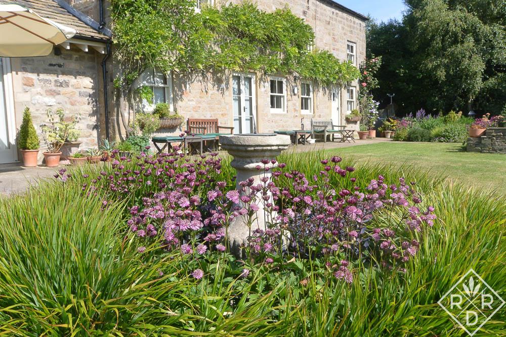 Purple astrantia, masterwort, around a large bird bath in the back garden.