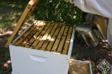 Smoking the bees to get them to go down into the hive. People think smoke calms them, but really, it just tells them their hive is on fire. Poor bees.
