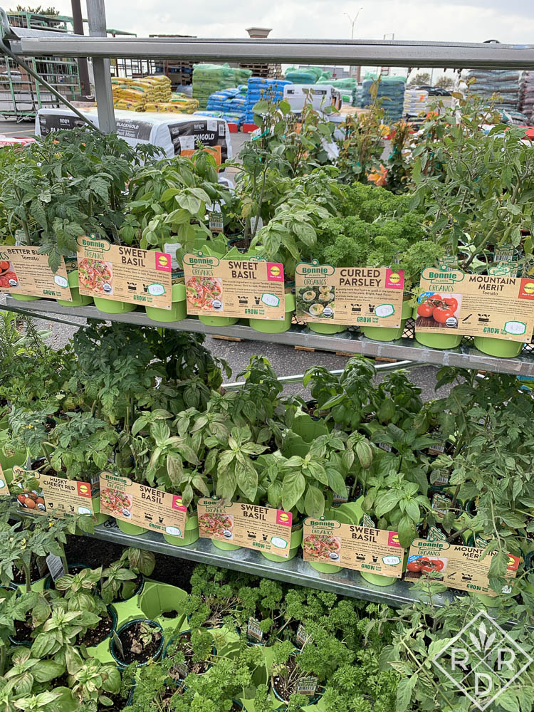 I found these Bonnie Plants organic veggies at Westlake Ace Hardware on 15th and Broadway in Edmond. Get yours quick before they burn up in that asphalt parking lot.