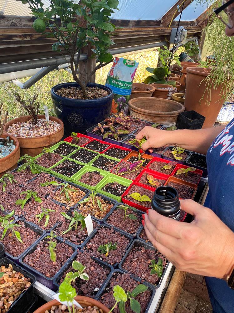 Put cuttings in potting soil