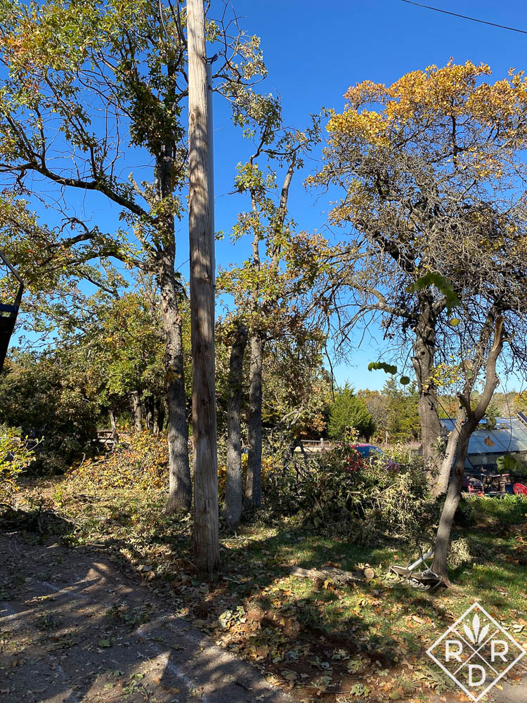 Damaged trees in side yard after the storm.