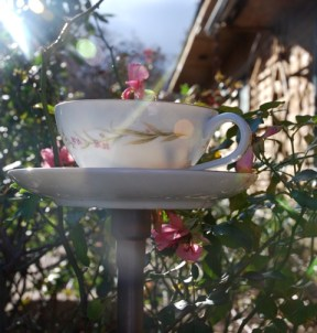 Teacup birdfeeder backed by freeze dried roses