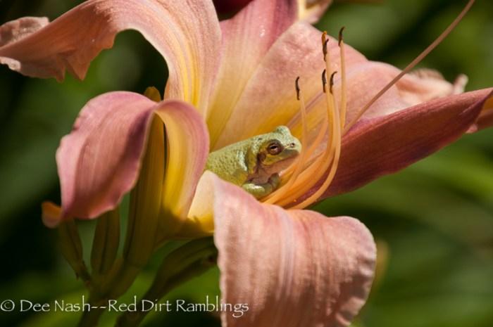 The four B's to daylily garden zen