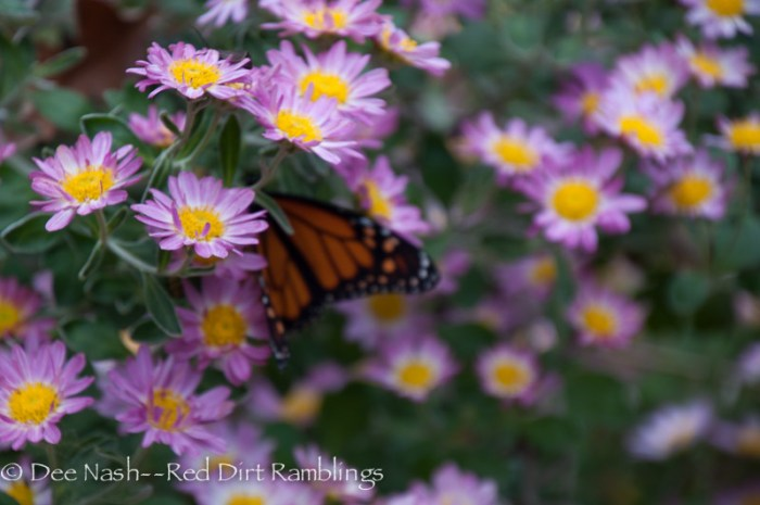 Monarch shyly hiding on 'Will's Wonderful' mum. If you can only have one mum, this should be the one.