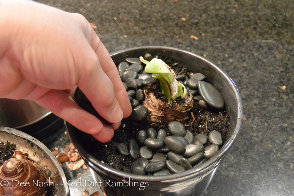 Place stones or moss around the bulb to give it a professional look.