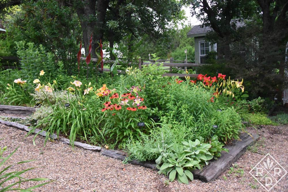 Echinacea 'Cheyenne Spirit' and many daylilies brighten my back garden.