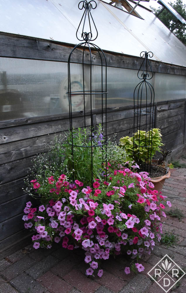 Probably my favorite container of the year is this one next to the greenhouse. It is filled with Supertunia Vista Parade, Angel Face Steel Blue angelonia, Superbells Doublette Love Swept, Diamond Mountain Euphorbia and Supertunia Vista Bubblegum which were all test plants.