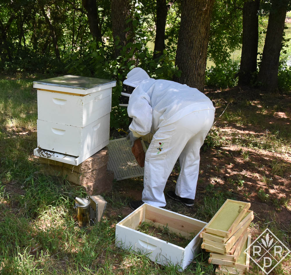 Not the most flattering picture, but it does show the entire hive yesterday. I'm getting ready to take off the top cover, and next to me are the super and its more shallow frames. Beekeepers only take honey from the super.