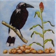 Sue's Currawong and sorghum - the seeds are decidedly potato like..... :(