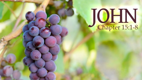 John 15 4-5 vine and branches