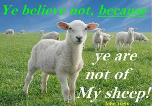 John 10:26 - Does Jesus Choose who will be His Sheep?