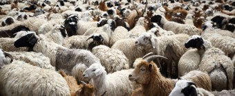 Parable of the Sheep and Goats