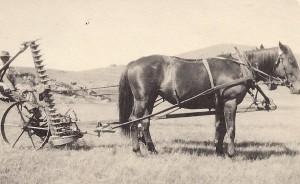 Herb Swan mowing Hay in 1914