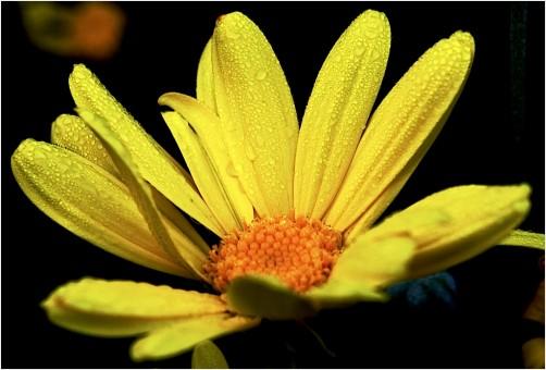 yellow morning dew mood