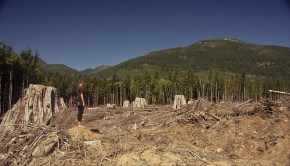 old_growth_clearcut