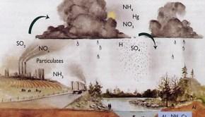 acid-rain-mechanics1