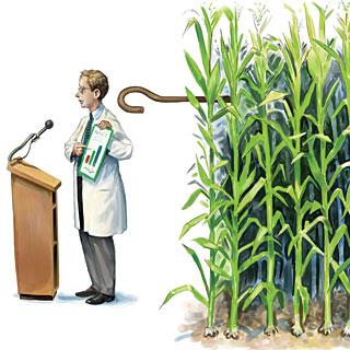 do-seed-companies-control-gm-crop-research_matt_collins