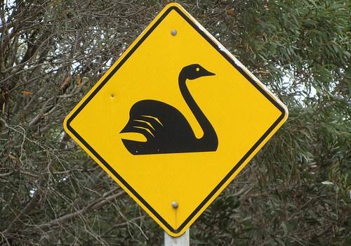 black-swan-crossing-by-arthur-chapman