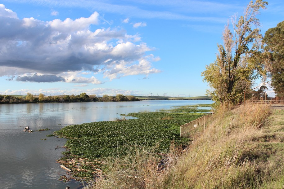 "Environmental Water Caucus: ""Just say no"" to Cali's water-stealing Delta Tunnels"