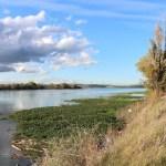 Sacramento River by Dan Bacher