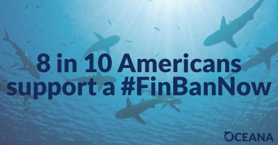 8 in 10 Americans support a shark fin trade ban bill